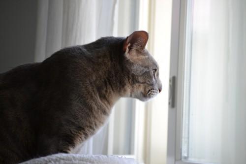 Figo katselee tipu-tv:tä. Ja sillä oli kärpänenkin työn alla siinä ensin!