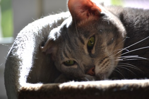 Figo ottaa aurinkoa kiipeilytelineessä korva rutussa.