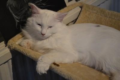 Heti oven vieressä lepäili yksi kissa kiipeilypuussa.
